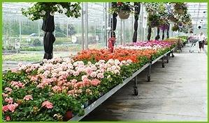 Bradford Greenhouses Ltd